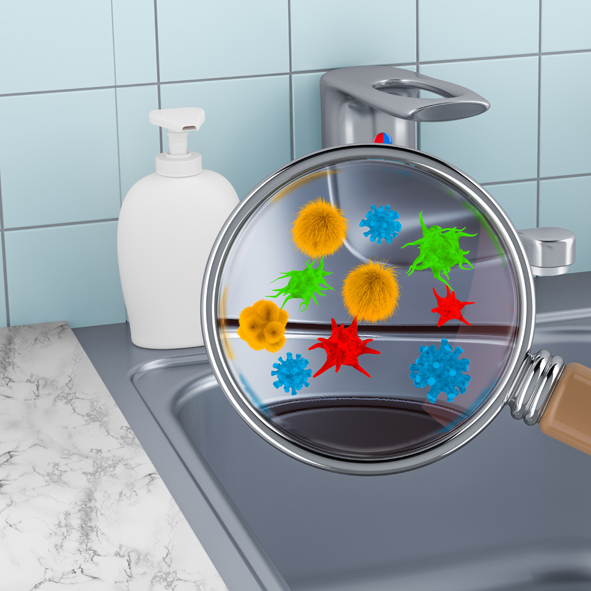 Bacteria in the kitchen